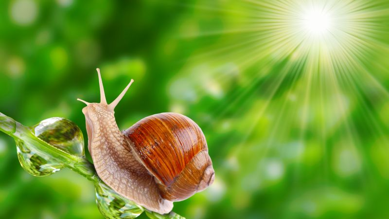 snail, nature, sunshine (horizontal)