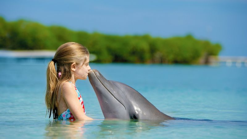 Girl and dolphin, ocean, Maldives (horizontal)