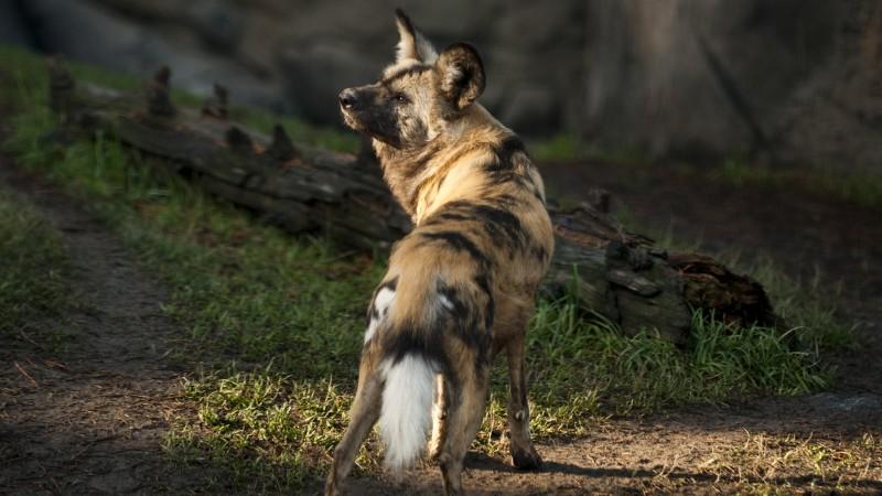 Pet Quotes Dog Loss