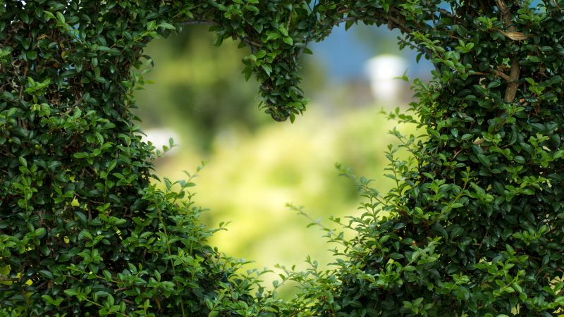 heart, 4k, HD wallpaper, green, leaves, bush (horizontal)