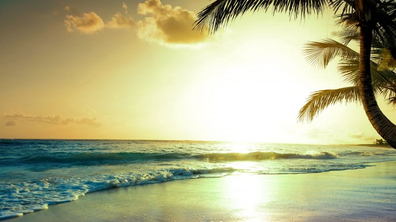 tropical beach, 5k, 4k wallpaper, paradise, sunset (horizontal)