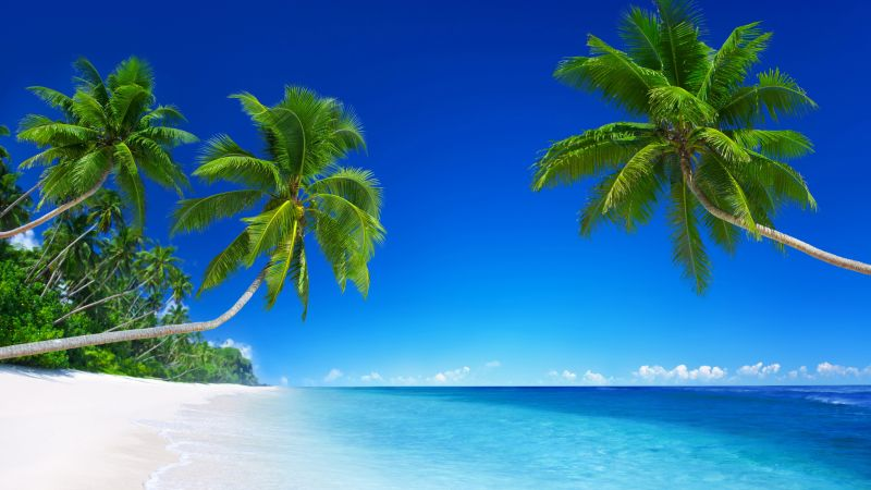 tropical beach, 5k, 4k wallpaper, 8k, paradise, palms, sea, blue (horizontal)