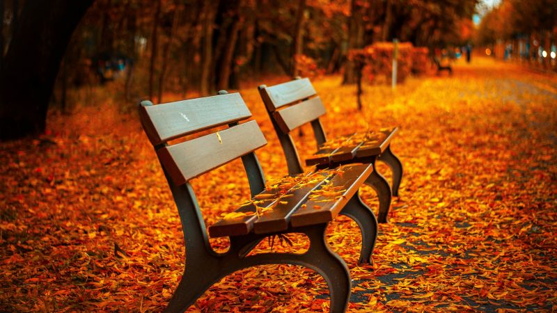 autumn park, 5k, 4k wallpaper, trees, leaves, bench (horizontal)