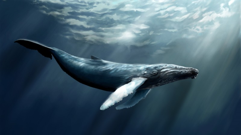 Whale, sea, ocean, water, underwater, diving, art, rays, World's best diving sites (horizontal)