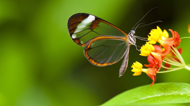 Butterfly, 5k, 4k wallpaper, insects, flowers, green, Glass, nature, garden (horizontal)