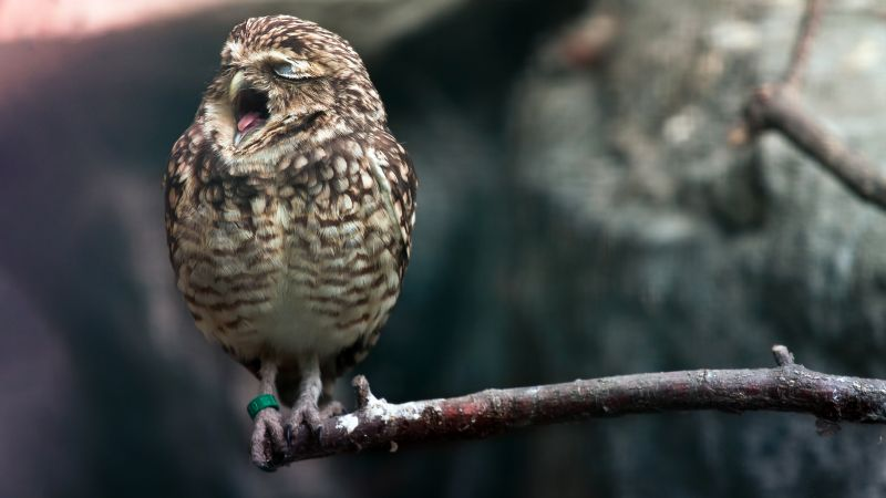 Owl, cute animals (horizontal)