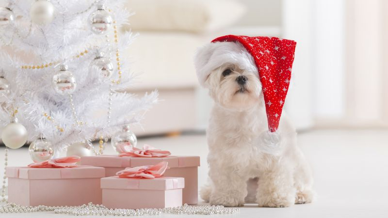 Puppy, Christmas, New Year, fir-tree (horizontal)