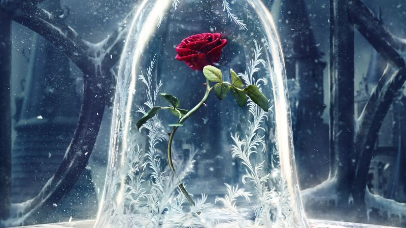 Beauty and the Beast, glass, rose, best movies (horizontal)