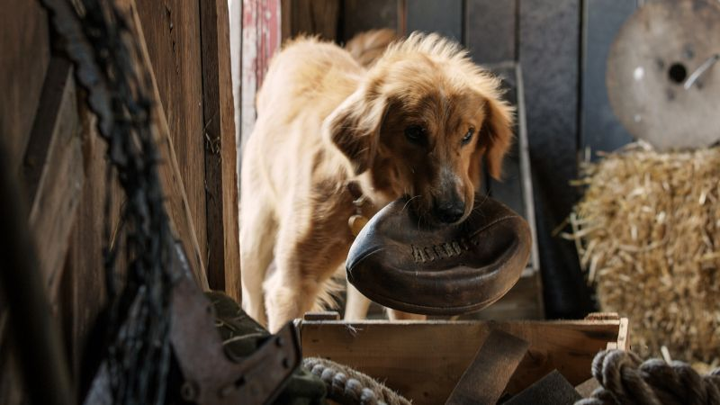 A Dog's Purpose, dog, best movies (horizontal)