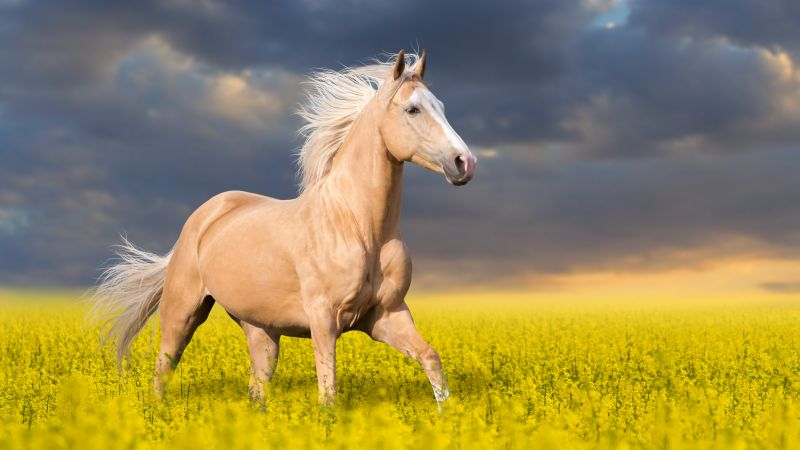 Horse, cute animals, 5k (horizontal)