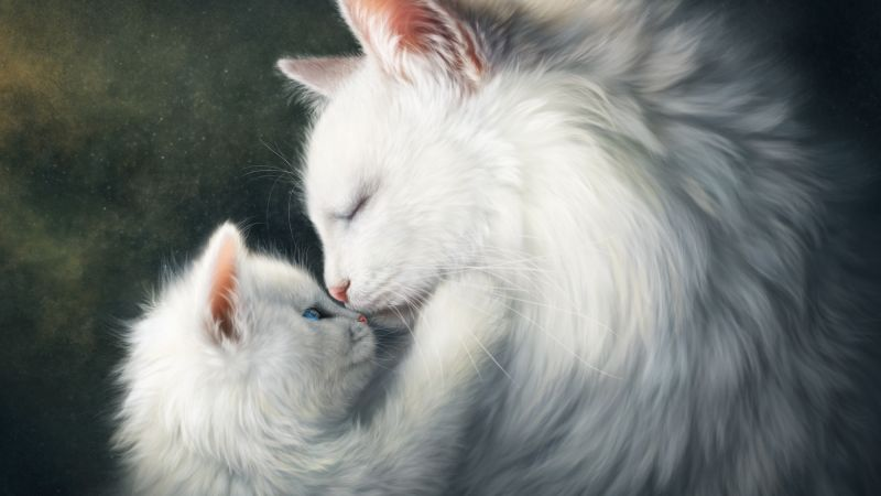 love image, cats, HD (horizontal)