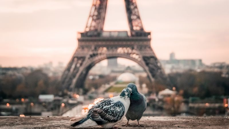 love image, doves, 4k, paris (horizontal)