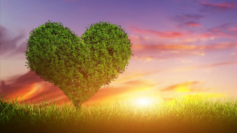 love image, heart, tree, 5k (horizontal)