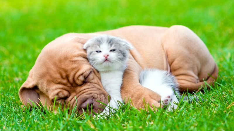 dog, kitten, 5k (horizontal)