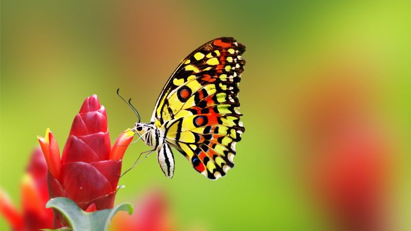 Wallpaper Butterfly 5k 4k Wallpaper Insects Flowers Green Glass Nature Garden Os 1257