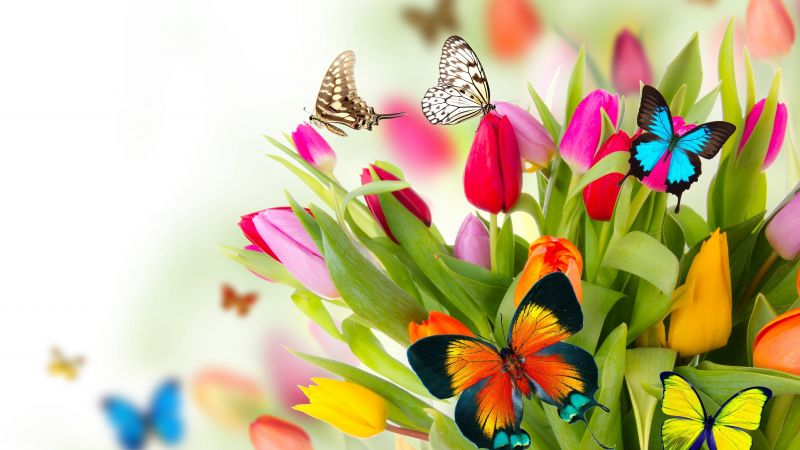 butterfly, flowers, tulips, 4k (horizontal)