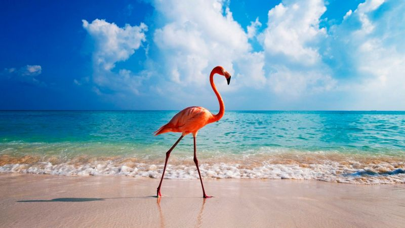 flamingo, bird, beach, ocean, 4k (horizontal)
