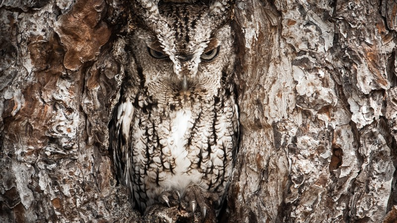 National Geographic, 4k, HD wallpaper, Owl, Hidden, Tree, Masking, Funny (horizontal)