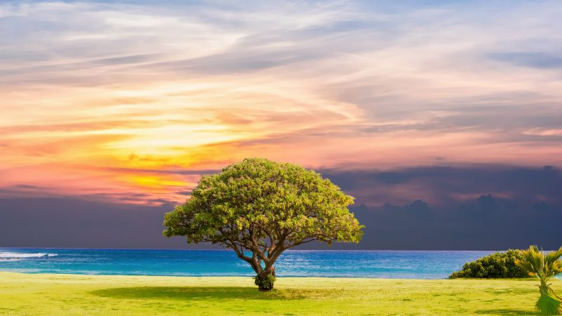 tree, nature, ocean, landscape, 5k (horizontal)