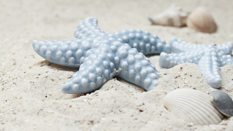 starfish, shell, shore, 5k (horizontal)