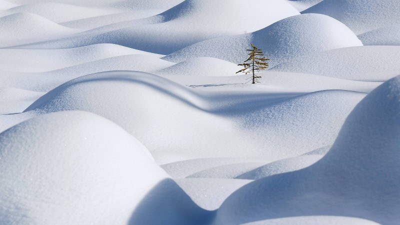 Snow, 4k, HD wallpaper, Snowdrift, Clean, Fir-tree (horizontal)