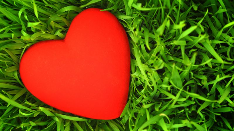 love image, heart, grass, 5k (horizontal)