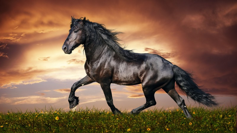 horse, 5k, 4k wallpaper, hooves, mane, galloping, black, sunset, green grass, sky, clouds (horizontal)