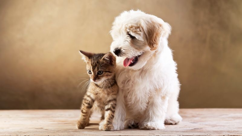 puppy, kitten, funny animals, 5k (horizontal)