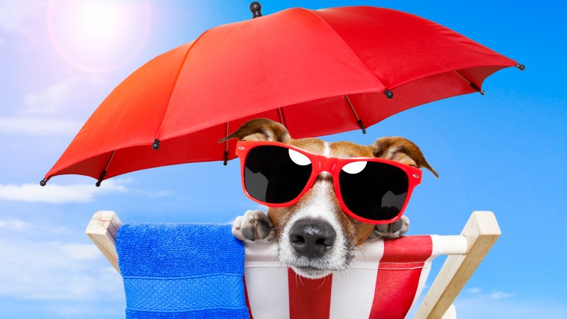 Dog, puppy, sun, summer, beach, sunglasses, umbrella, vacation, animal, pet, sky (horizontal)