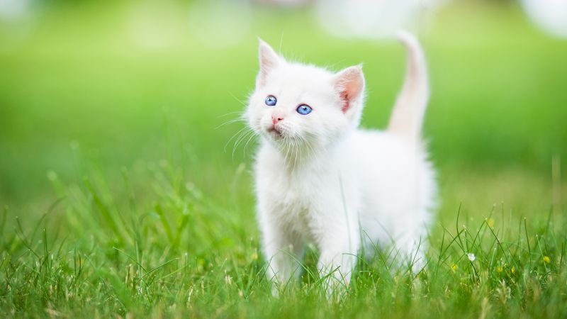 kitten, cute animals, grass, 5k (horizontal)