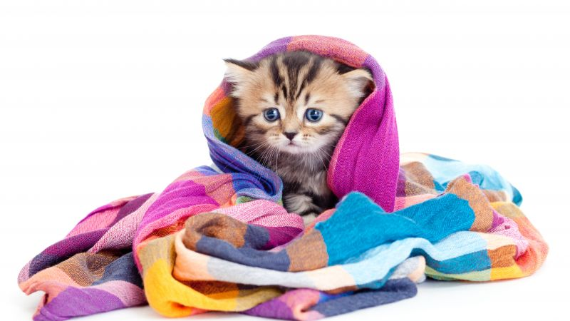 kitten, cute animals, 5k (horizontal)