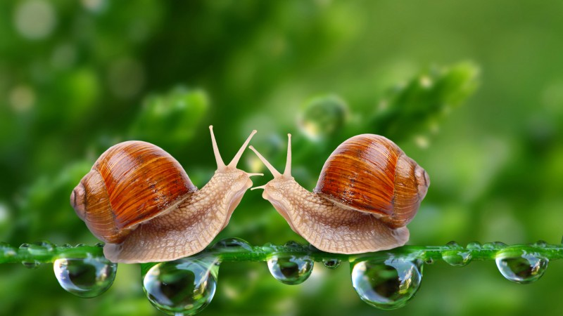 Snail, 5k, 4k wallpaper, water drops, green, nature, insects, close (horizontal)