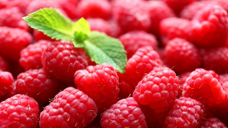 raspberries, delicious, 5k (horizontal)