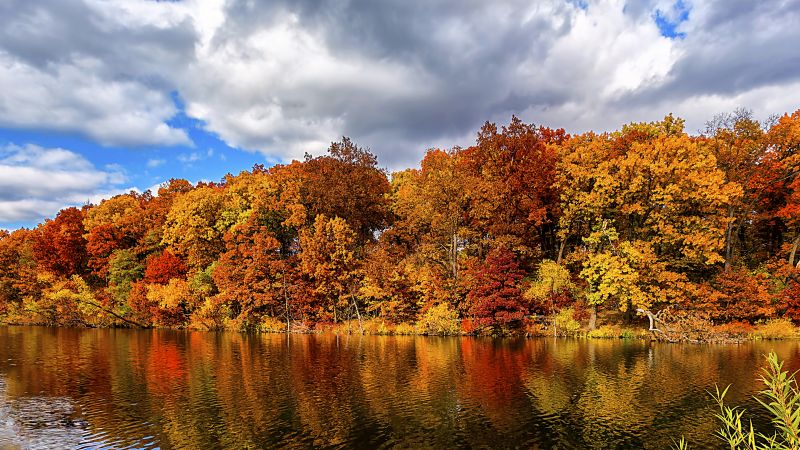 autumn, forest, lake, 5k (horizontal)