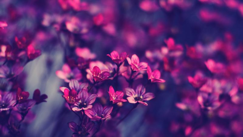 flowers, purple, 4k (horizontal)