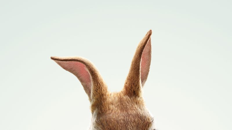 Peter Rabbit, HD (horizontal)