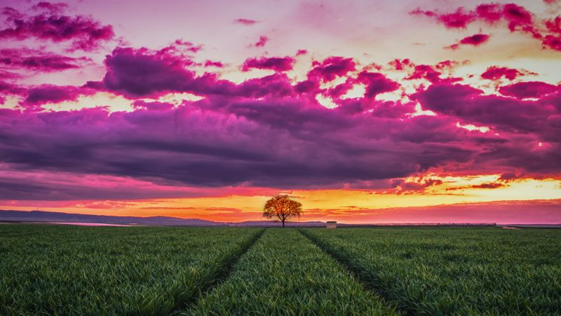 sunset, field, grass, sky, clouds, 4k (horizontal)