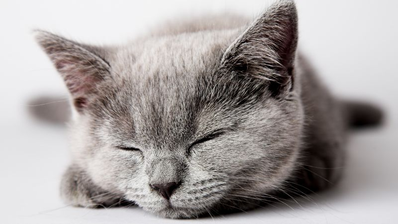 cat, cute, sleep, 5k (horizontal)