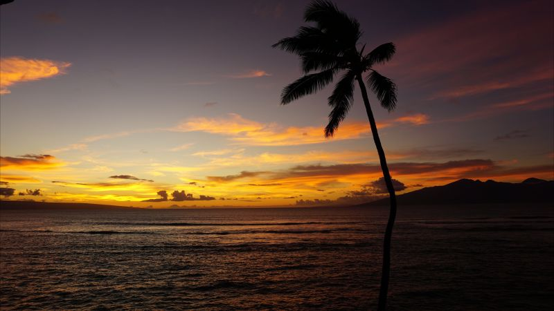 Maui, Hawaii, ocean, palm, sunset, 5k (horizontal)