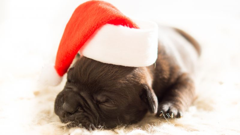 Christmas, New Year, puppy, cute animals, 4k (horizontal)