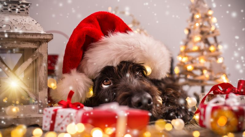 Christmas, New Year, snow, dog, cute animals, 4k (horizontal)