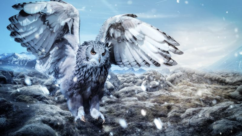 owl, mountains, snow, winter, 5k (horizontal)