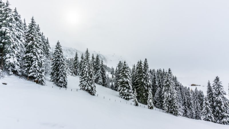 forest, tree, snow, winter, 5k (horizontal)
