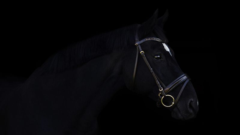 horse, cute animals, black, 4k (horizontal)