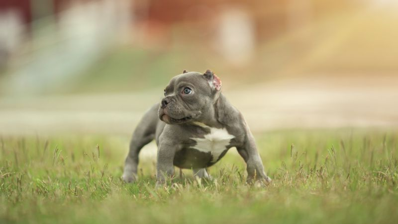 puppy, funny animals, 5k (horizontal)