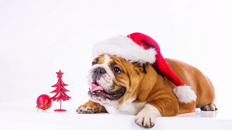 Christmas, New Year, dog, cute animals, 4k (horizontal)