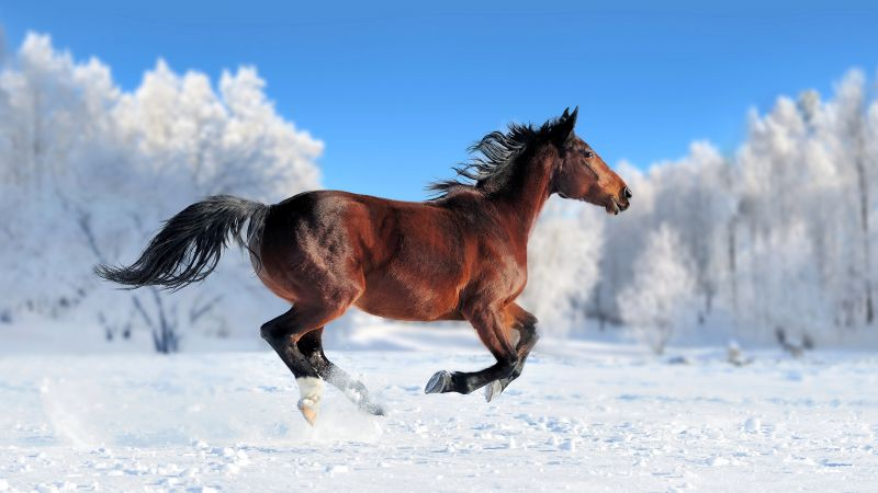 horse, cute animals, snow, winter, 4k (horizontal)