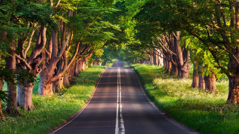 road, trees, summer, 4k (horizontal)
