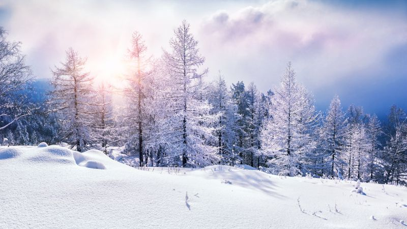 forest, snow, winter, clouds, 8k (horizontal)