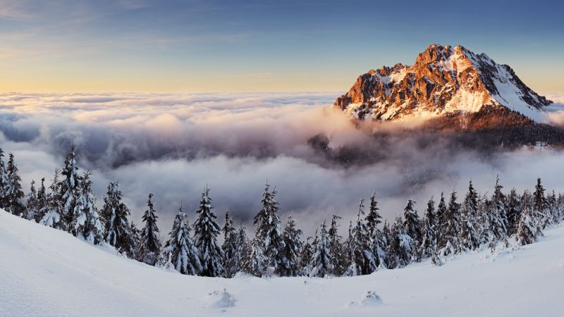 mountains, forest, snow, winter, fog, 8k (horizontal)
